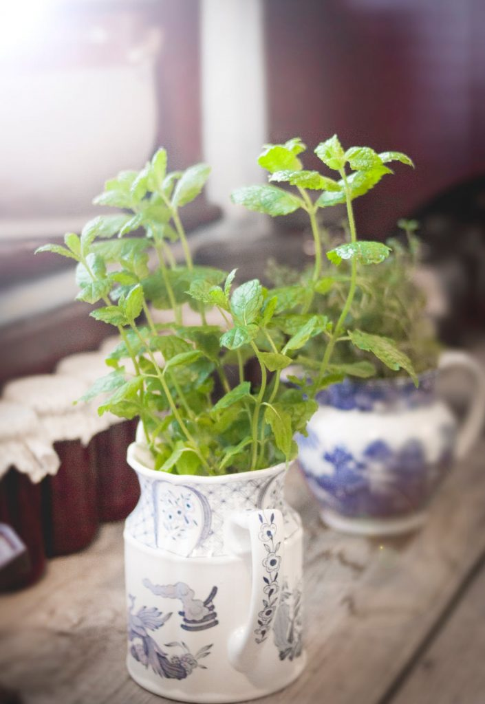 Mint cuttings growing in a mug